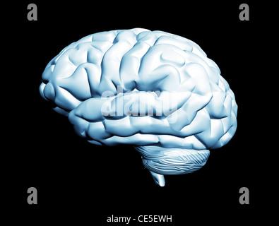 Menschliche Gehirn auf schwarzem Hintergrund isoliert - Stockfoto