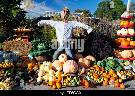 Herbst herbstliche Herbst Ernte essen, die essbaren Garten Ernte Feldfrüchte anzeigen angezeigt feiern Feier Squash Wurzel Kürbis Vogelscheuche Stockfoto