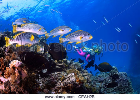 Weibliche Taucher Erkunden Ein Korallenriff Verschiedene Pr Chtige Weichkorallen Und Wrackbarsch