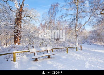 Holzbank auf Weg bedeckt in frischen Schnee Sherwood Forest Land Park Edwinstowe Nottinghamshire England uk gb EU - Stockfoto
