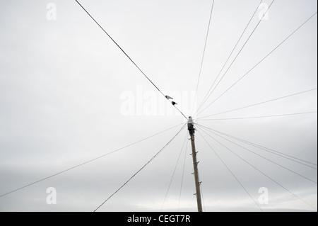 Vögel am Telefonkabel Stockfoto, Bild: 26688751 - Alamy