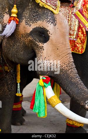Elefanten hautnah in Lopburi, Thailand - Stockfoto
