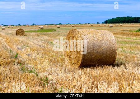 Großballen Stroh auf einem abgeernteten Feld, Polen - Stockfoto