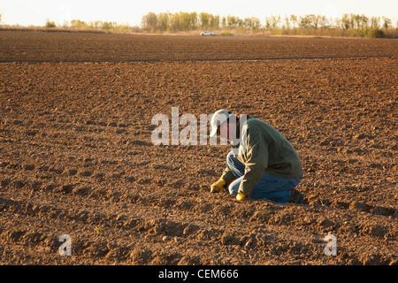 Landwirtschaft - überprüft ein Bauer (Züchter) Tiefe Saatgutablage in einem Feld neu bepflanzt mit Mais / in der - Stockfoto