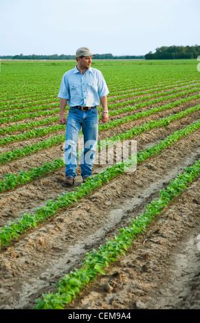 Landwirtschaft - ein Bauer (Züchter) zu Fuß durch seinen Bereich Inspektion seiner frühen Wachstum Ernte von Sojabohnen - Stockfoto