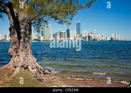 Bäume und die Skyline von Miami, Florida - Stockfoto