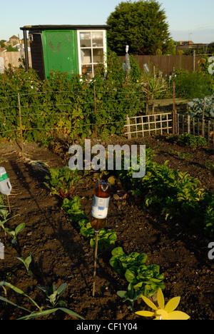 Kohl und anderen Gemüsesorten auf einer Zuteilung. - Stockfoto