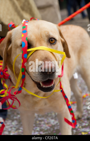 Ein Hund verstrickt in Papier Dekoration bei ZueriCarneval Fasnacht verschieben 26. Februar 2012 in Zürich, Schweiz. - Stockfoto