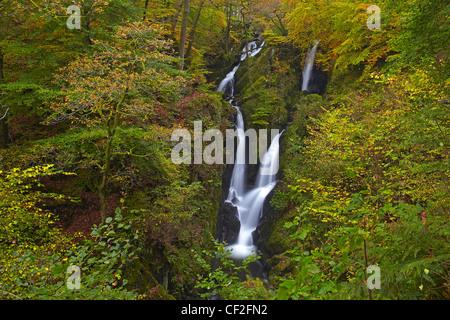 Stock Ghyll Kraft, einem spektakulären 70 Fuß Wasserfall im Herbst. - Stockfoto