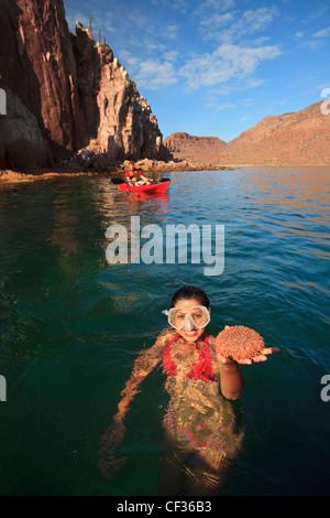 Ein Tourist mit marinen Lebens In der Hand In das Wasser auf der Insel Espiritu Santo; La Paz, Baja California Mexiko - Stockfoto
