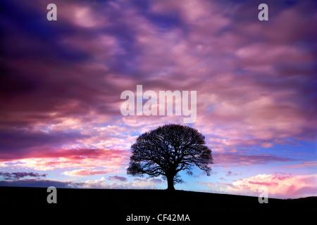 Dämmerung senkt sich über ein einsamer Baum auf See Bassenthwaite. - Stockfoto