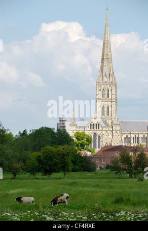 Kathedrale von Salisbury und Harnham Strandwiesen. Die Kathedrale hat den höchsten Kirchturm im Vereinigten Königreich. - Stockfoto