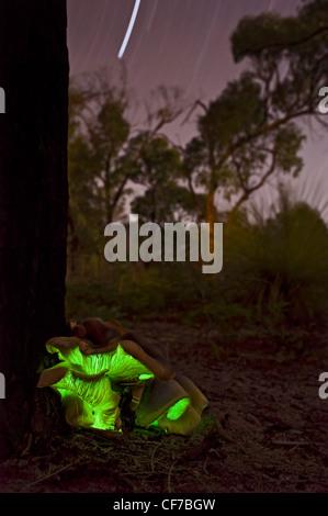 Australische leuchtenden Geist Pilz erschossen in der Nacht mit Sternspuren - Stockfoto