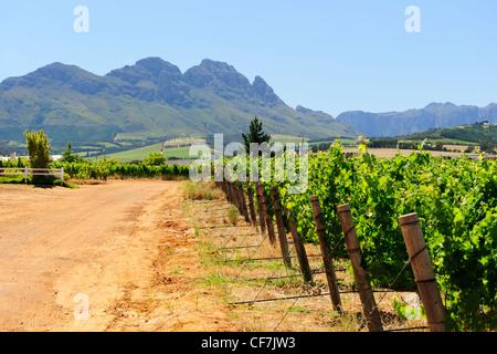 Thresen Wine Estate, Stellenbosch, Western Cape, Südafrika - Stockfoto