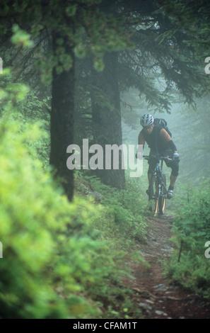 Mann-Mountainbiken auf Wald trial, Jasper Nationalpark, Alberta, Kanada. - Stockfoto