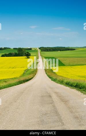 Straße durch Ackerland, Tiger Hügel, Manitoba, Kanada - Stockfoto
