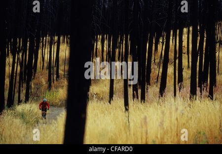 Eine Frau mit ihrem Mountainbike genießen die Wanderwege im verbrannten Wald in Kelowna, British Columbia, Kanada - Stockfoto