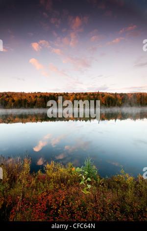 Dawn Highlights Wald hinterlässt meist Zucker-Ahorn - Stockfoto