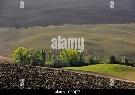 Blick auf die hügelige Landschaft von Kreta, Tuscany, Italien, Europa - Stockfoto