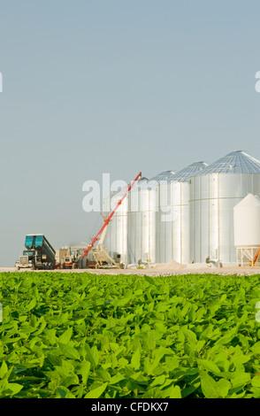 Mitte Soja Wachstumsfeld, entladen Weizen in Getreide-bins(silos) im Hintergrund, Lorette, Manitoba, Kanada - Stockfoto
