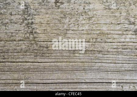 Detail von verwittertem Holz - eigentlich die Oberfläche des hölzernen Picknickbank. - Stockfoto