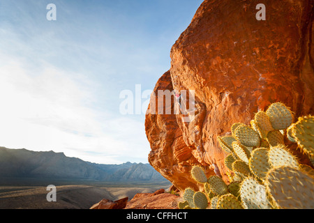Ein Kletterer in Calico Hills, Red Rock Canyon National Conservation Area, Nevada, USA. - Stockfoto