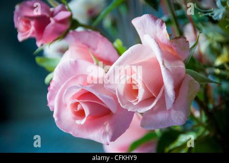 Detail der hübschen rosa Rosenstrauß - Stockfoto