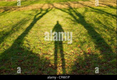 Schatten einer Person stehen zwischen den Bäumen auf dem Land UK - Stockfoto