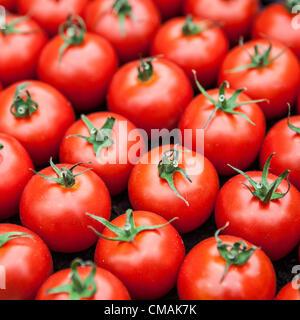 Hampton Court, UK. Mittwoch, 4. Juli 2012 zeigen Tomaten im floralen Festzelt im Hampton Court Palace Flower.  Dies - Stockfoto