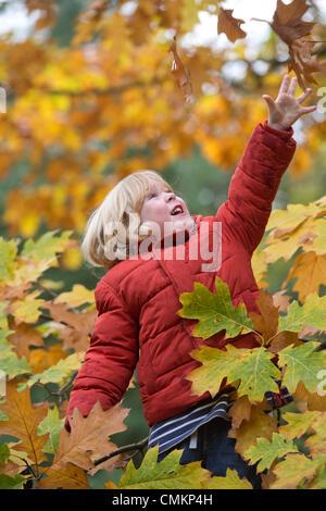 Ein drei Jahre alter Junge spielt in verlässt im Westonbirt Arboretum, Gloucestershire (2. November 2013). Bildnachweis: - Stockfoto