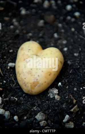 Kartoffel, wie Herzen geformt - Stockfoto