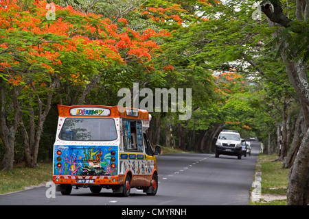 Flamme Bäume in Blüte am Haven Louis Alley, Trou Aux Biches, Eis wagen, Mauritius, Afrika - Stockfoto