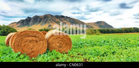 Ländliche Landschaft. Goldene Heuballen im Vordergrund - Stockfoto