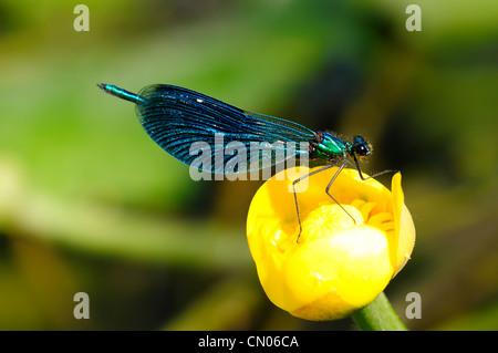 Libelle - Stockfoto