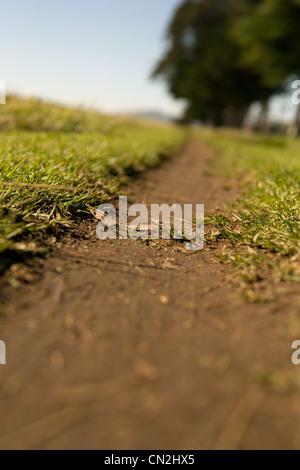 Weg durch Rasen, Oberflächenansicht - Stockfoto