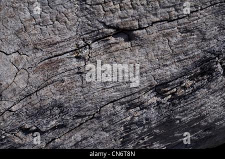 Schließen detail von Verwitterten anmelden. Risse im Holz. - Stockfoto