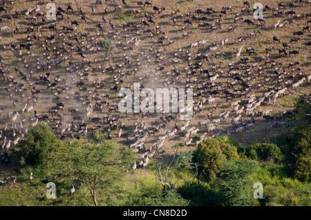 Wanderung der Gnus (Connochaetes Taurinus) am Simuyu-Fluss in der Serengeti, Luftaufnahme, Tansania - Stockfoto