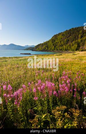 Malerische Aussicht von jedem am Chilkat Staatspark, Chilkat Inlet, Haines, südöstlichen Alaska, Sommer - Stockfoto