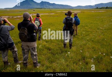 Besucher machen Sie Fotos von Braunbär Weiden auf Seggen und Gräser in Hallo Bay Wiese, Katmai Nationalpark & zu - Stockfoto