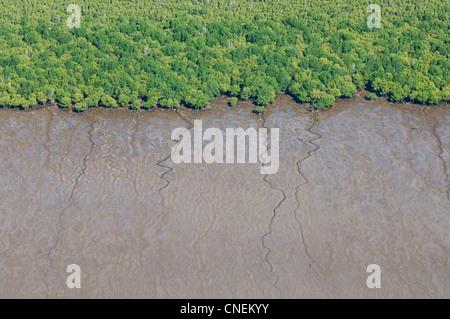 Mangrovenwald und Wattenmeer entlang der Küste von Pwani Region, Luftaufnahme, Tansania - Stockfoto
