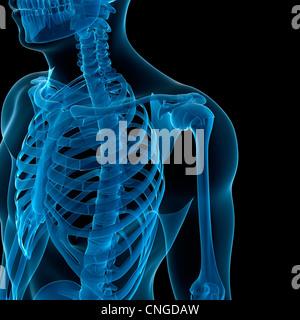Oberkörper Knochen Kunstwerk - Stockfoto