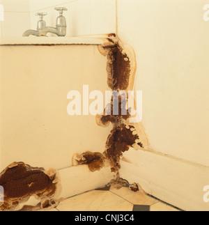 hausschwamm pilz fruchtk rper bad uk stockfoto bild 47726125 alamy. Black Bedroom Furniture Sets. Home Design Ideas