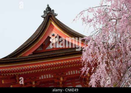 Kirschblüte in Kiyomizu-Dera-Tempel in Kyoto, Japan - Stockfoto