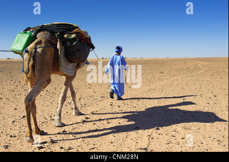 Nomad Berber zu Fuß mit einem Dromedar, Wüste Sahara, Marokko - Stockfoto