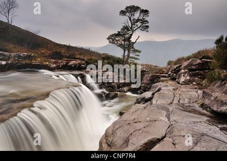 Wasserfall und Baum auf der Abhainn ein Fhasaigh Gleann Bianasdail, Torridon, Wester Ross, Schottisches Hochland - Stockfoto