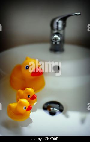 Ente und Entenküken im Waschbecken im Bad