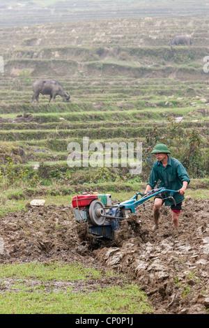 Ein junger Bauer sein Feld mit einem Benzinmotor Bodenfräse statt eines Ochsen pflügen Ackern, ein Ochse Fütterung - Stockfoto
