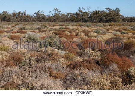 Salz-Buschland von Willandra Nationalpark, New South Wales, Australien - Stockfoto