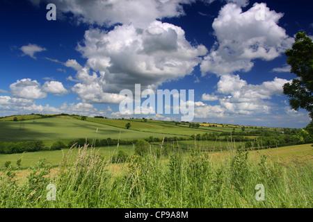 Grüne Felder - Stockfoto