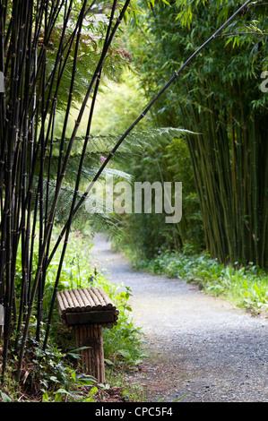 Bambus-Gehweg durch Dschungel an Lost Gardens of Heligan, Cornwall. England - Stockfoto